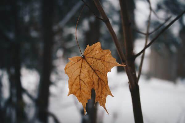 Cold Leaf photo