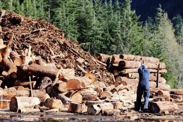 Lumberjack photo