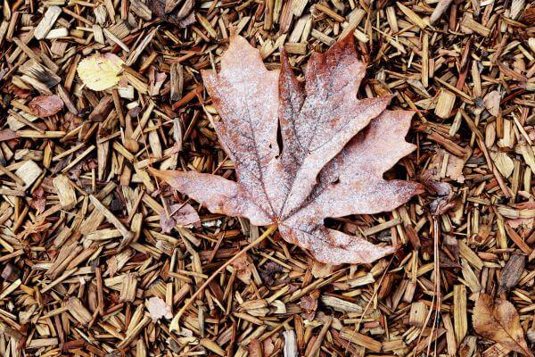 Leaf On Wood Carpet photo