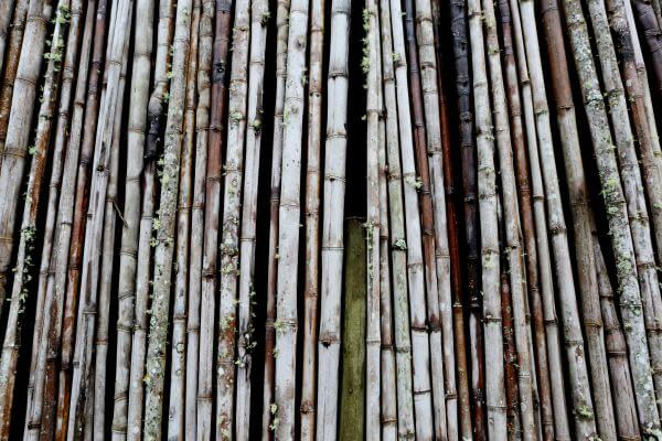 Bamboos photo