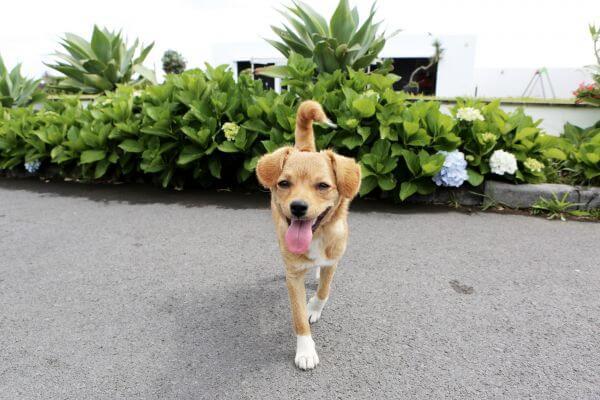 Friendly Dog photo