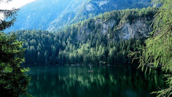 Pines Reflection photo