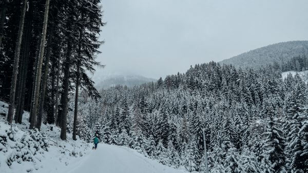Snowy Forest photo