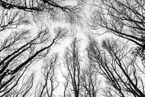 Through the Trees photo