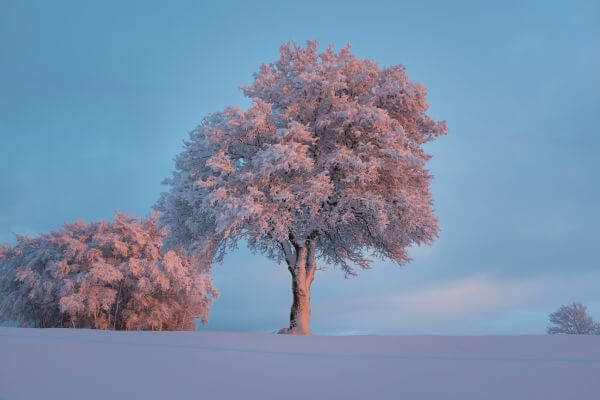Frosted Trees photo