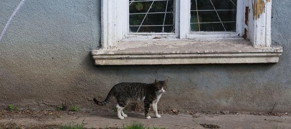 Cat of the Ukraine photo