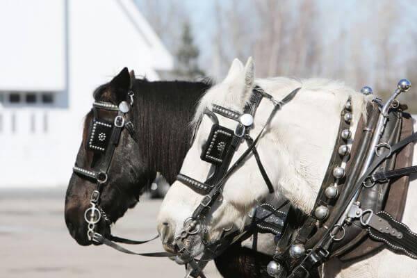 Horses Outdoors photo