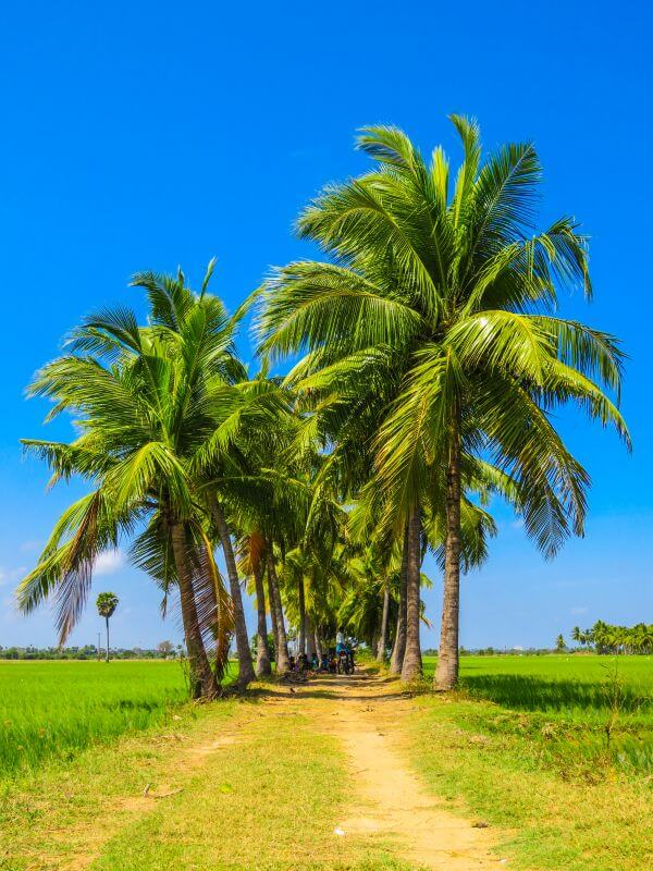 Palm Tree Road photo