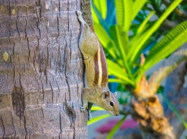 Squirrel Encounter photo