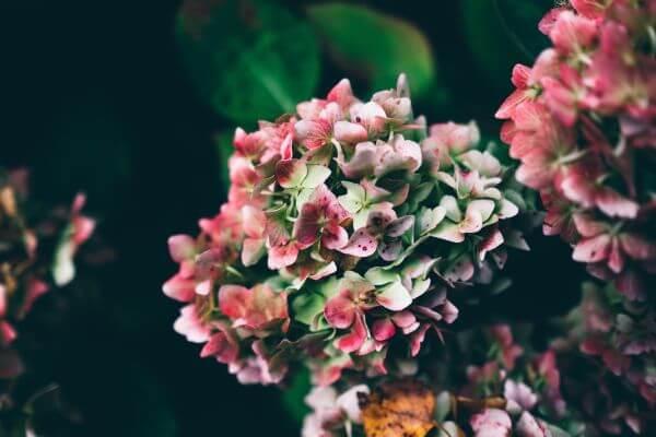 Growing Flowers photo