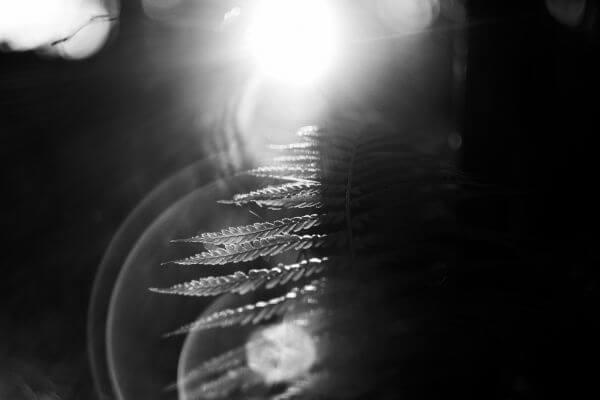 Plant Looking Light photo