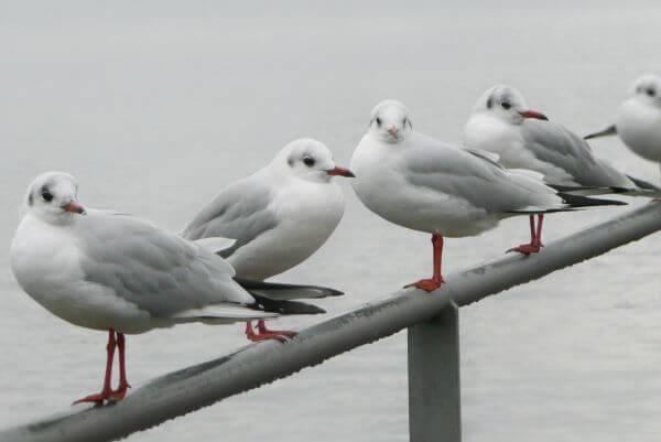 Seagulls Meeting photo