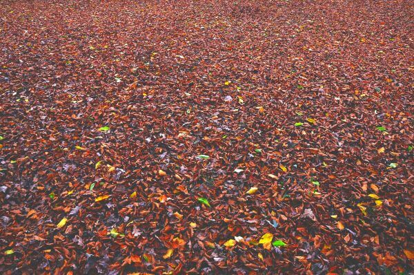 Carpet Leaves photo