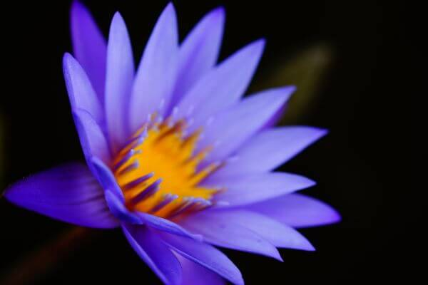 Flower Details photo