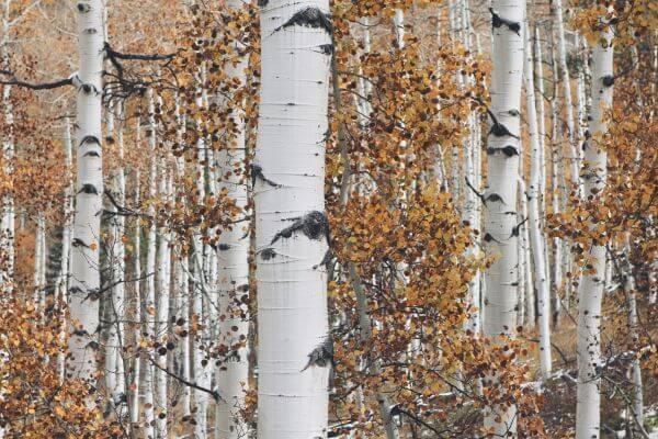 Trees photo