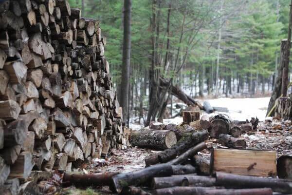 Logs photo