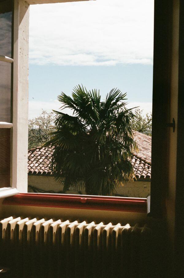Palm and window photo