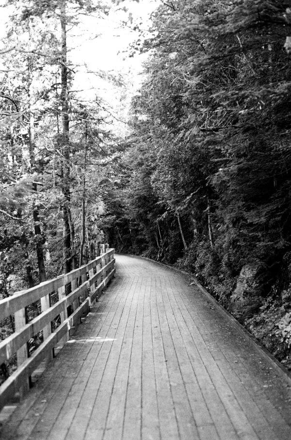 The walk photo