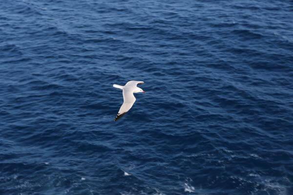 Gull photo