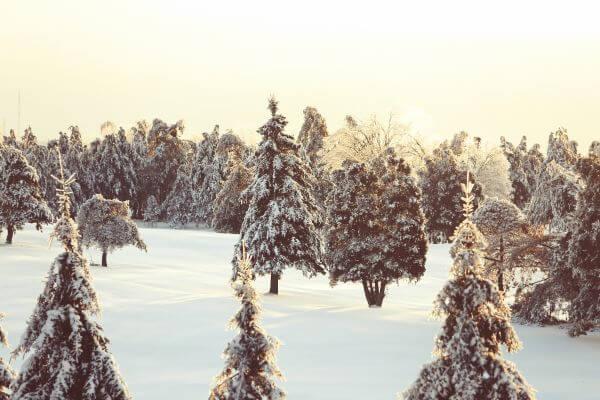 Winter Three photo
