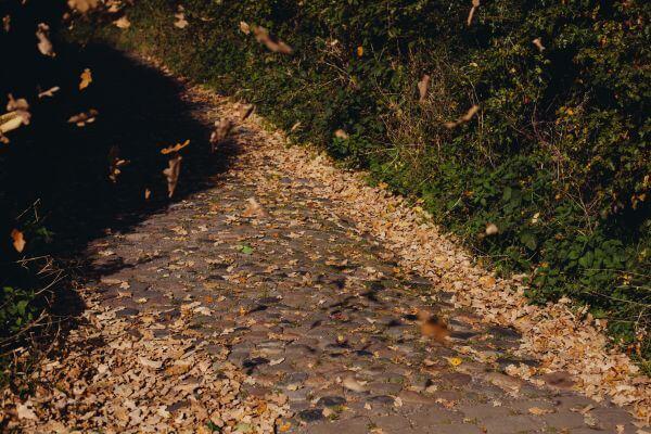 cobblestone photo