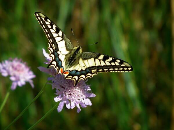 Butterfly Pollinating on Flower photo
