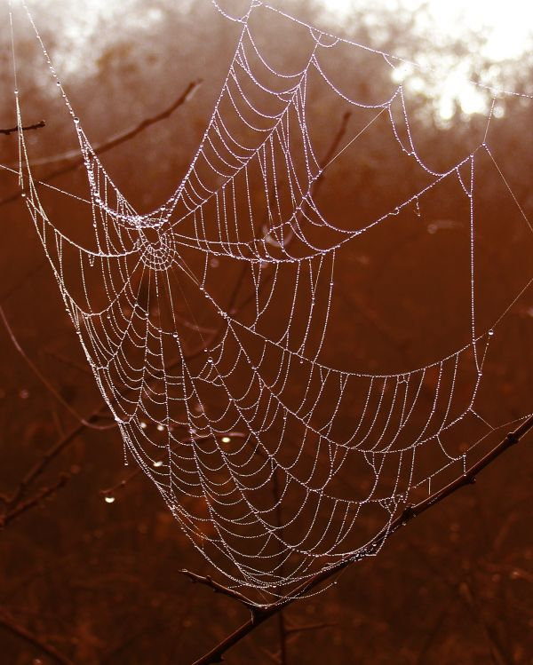 Arachnid photo