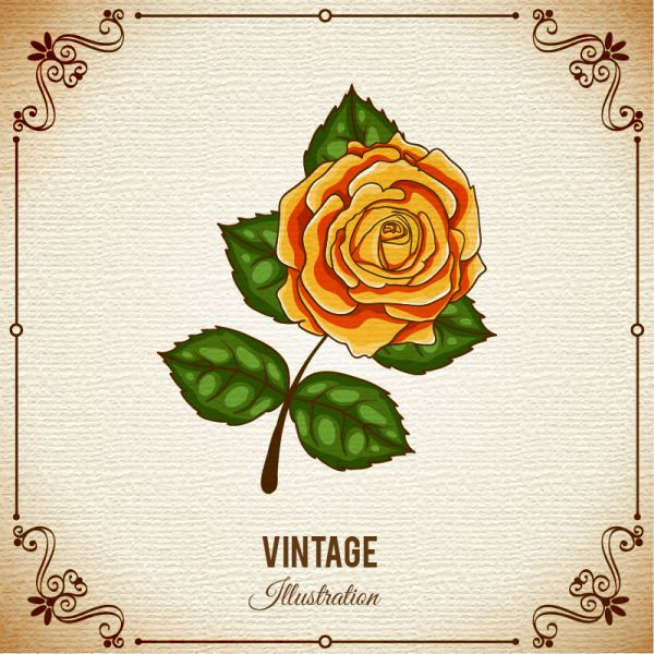 Vintage flower illustration with frame vector