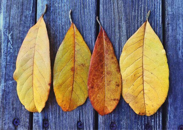 Autumn photo