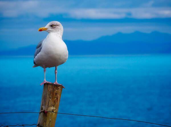 Avian photo