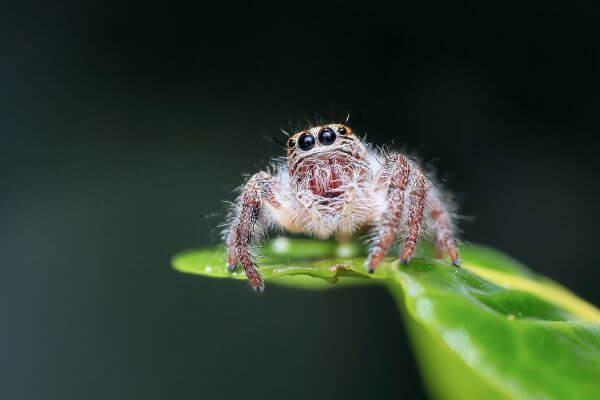 Spider on Web Against Black Background photo