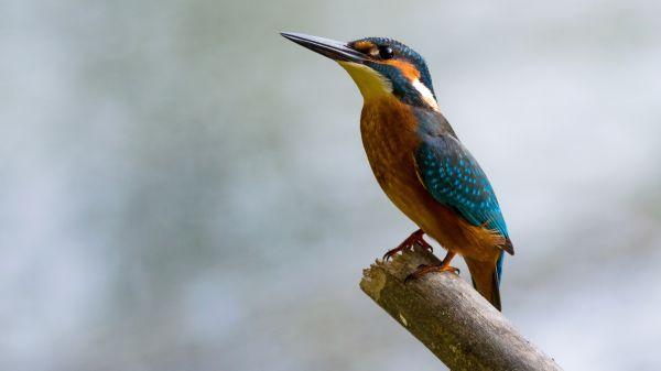 Bird Perching on Branch photo