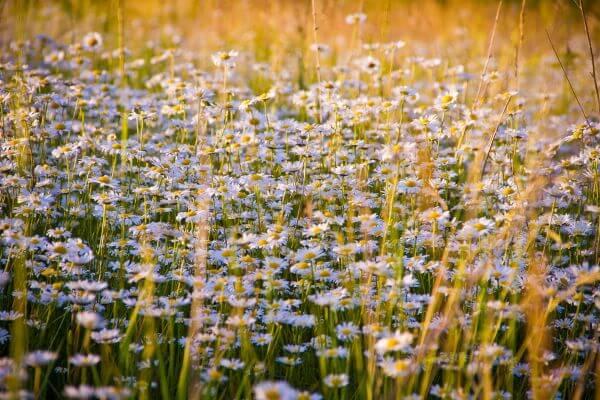 Flowers Growing in Field photo