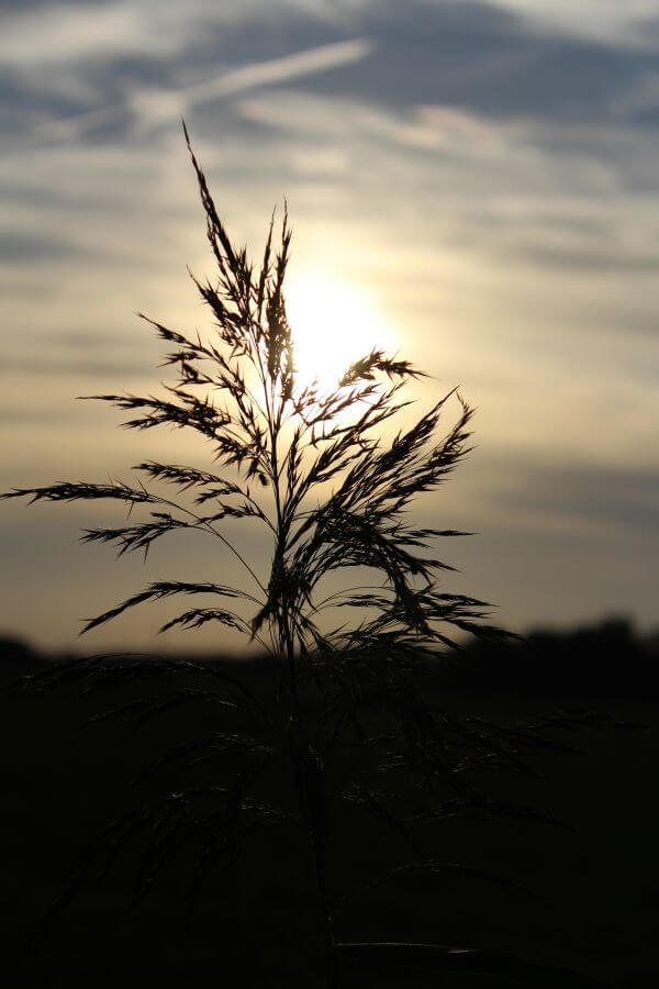 Plant Against Sunset Sky photo