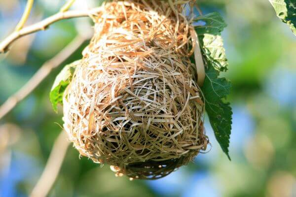 Bird's nest photo