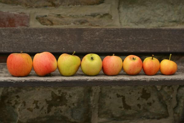 Apples photo
