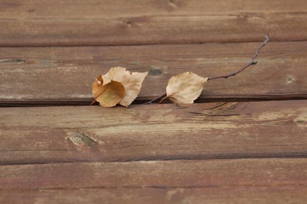 Dry leaves photo