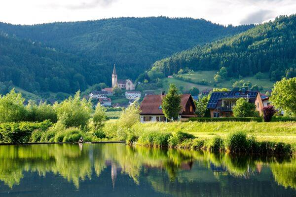 Black forest photo