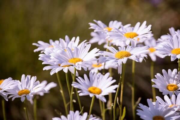 Bloom photo