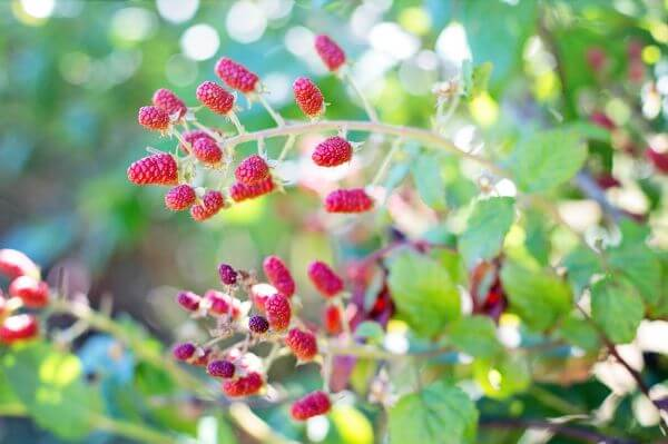 Berries photo