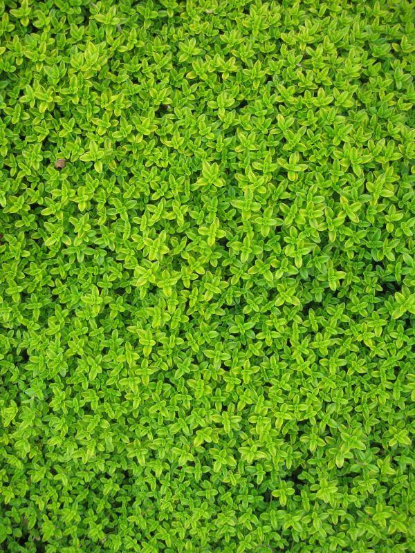 Foliage photo