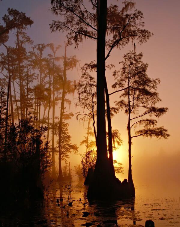 Mist photo