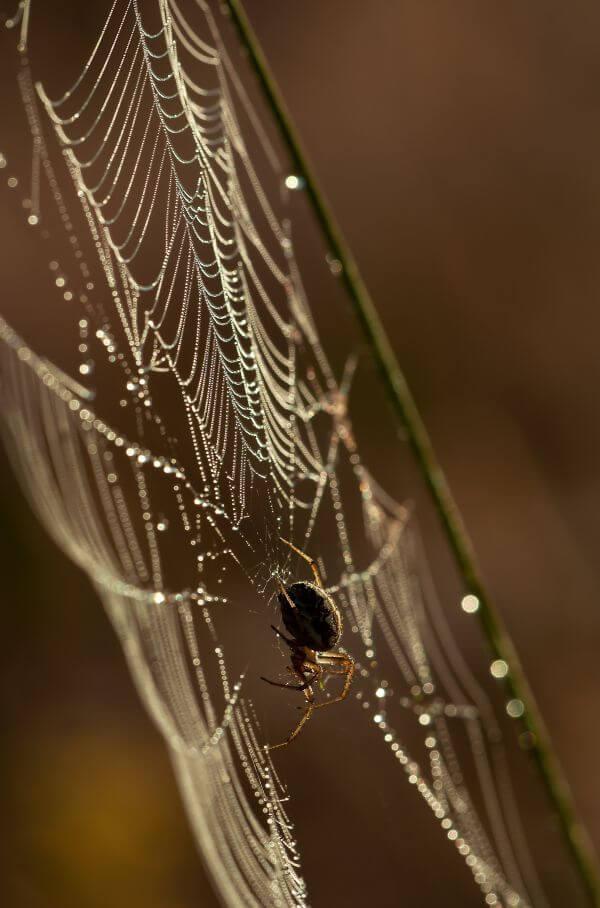 Cobweb photo
