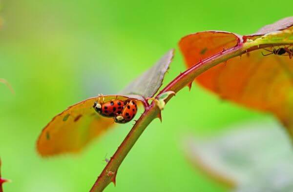 Bugs photo