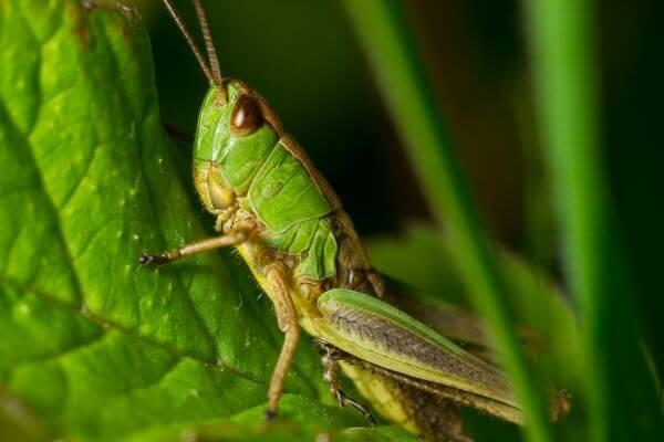 Close-up photo