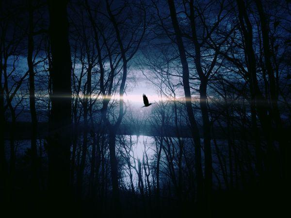 Bird photo