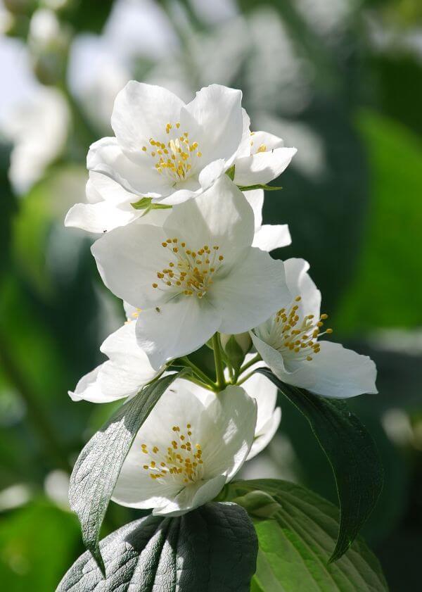 Botany photo