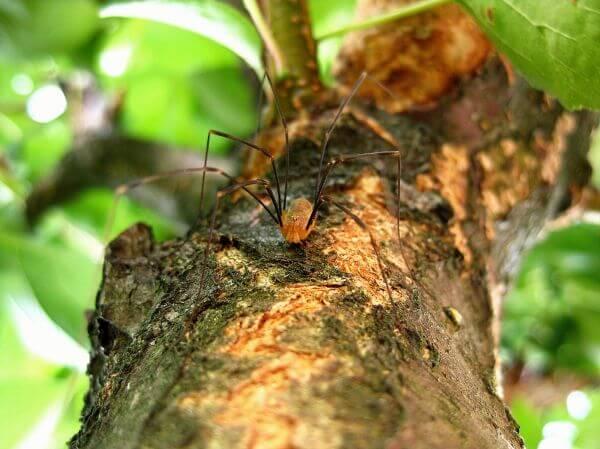 Arachnid photo