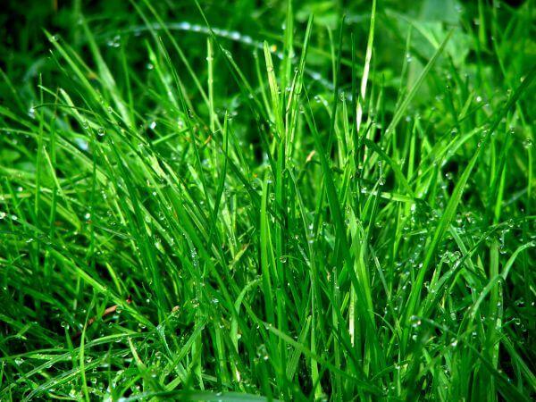 Dew photo