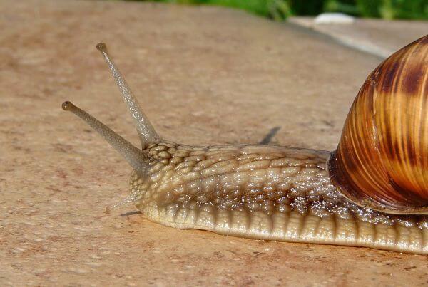 Antennae photo
